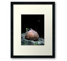 furry orange puffball Framed Print