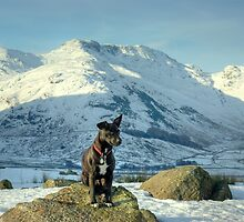 Tarn the Terrier... By Bow Fell by VoluntaryRanger
