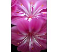 Double Delight - In Pink Photographic Print
