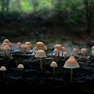 little pink mushrooms by Erin Anderson