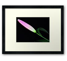 Gentle bud. Framed Print