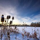 Blue Skies and Snow by Andrew Leighton