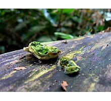 Bright green fungus Photographic Print