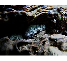 Mould  Photographic Print