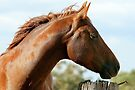 Chesnut quarter horse by julie anne  grattan