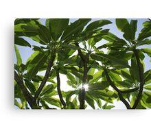 Tropical Canopy Canvas Print