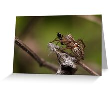 Lynx Spider and prey Greeting Card