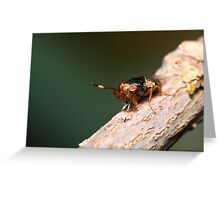 Crazy Eyed Fly Greeting Card