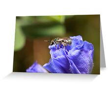 Sweat Bee Greeting Card