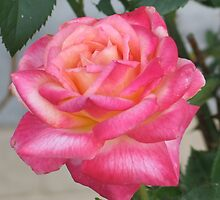 Dark Pink Rose by art2plunder