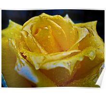 """""""Una rosa que florece""""  Poster"""