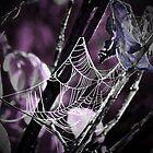Dark Web by mark4321