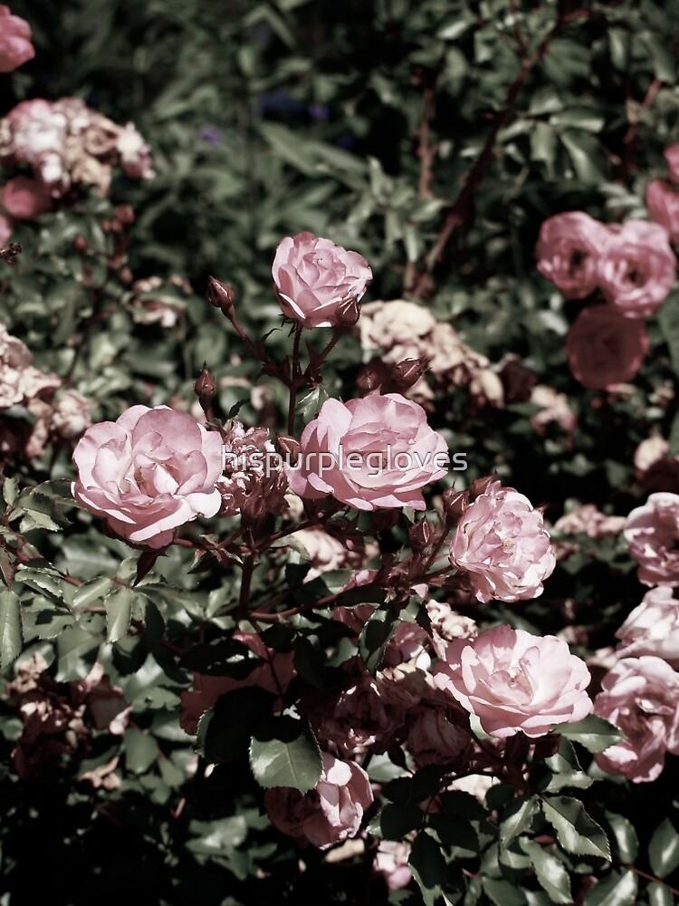 roses by hispurplegloves
