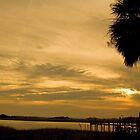Palmetto Sunset by Peter Van Egmond