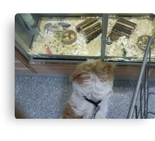 Skye at the Pet Shop, making friends? Canvas Print