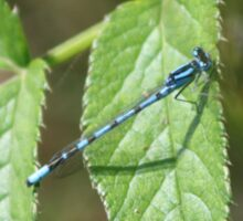 Crystal Blue Wings: Damselfly in Summer Sticker