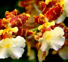 Bronze & White Orchids by Laurel Talabere