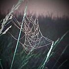 Dancing Web by mark4321