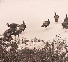 Snow Turkeys a by elisab