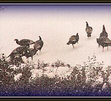 Snow Turkeys by elisab