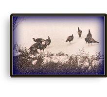 Snow Turkeys Canvas Print