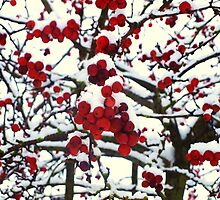 berry cold! by helen conibear