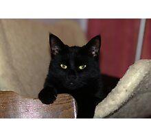 Yup, I'm a Black cat so what of it HMMMM ?? Photographic Print