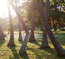 Fijian Sunrise 2 by JenniferElysse