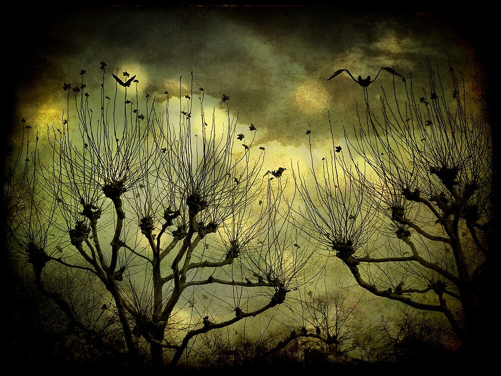 Night of Many Moons by © Kira Bodensted