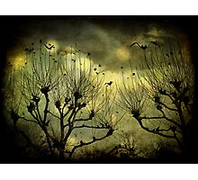 Night of Many Moons Photographic Print
