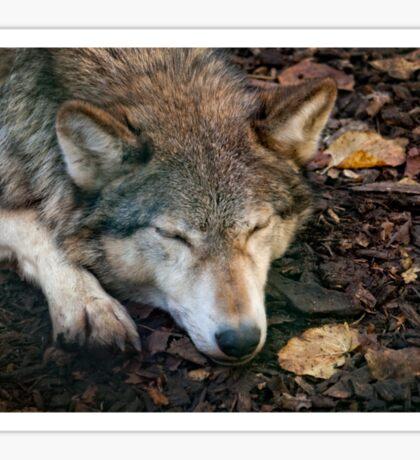 Sleeping Wolf Sticker
