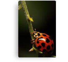 Lady beetle with a climb ahead Canvas Print
