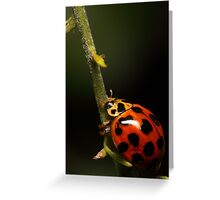 Lady beetle with a climb ahead Greeting Card