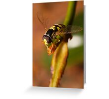 Hoverfly resting Greeting Card