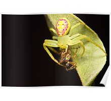 Flower Spider with dinner Poster