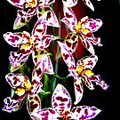Orchids in Purple &amp; White (cymbidium) -- Seven Blooms in All by Laurel Talabere