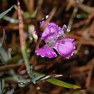 Raindrops On Flower by Jonice