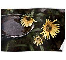 Sunflower Wilt Poster