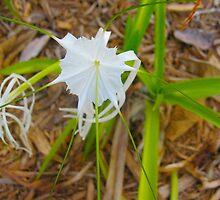 White Spider Lily Regalia by MarianBendeth