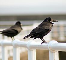 Rooks on railings by GreyFeatherPhot