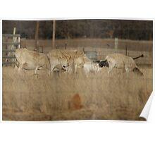 Lambing Time Poster