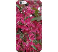 Pink flowers on a tree iPhone Case/Skin