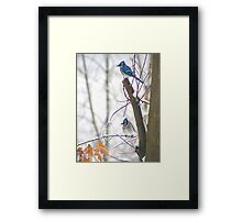 Blue Jays in Winter Framed Print