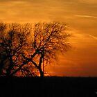 Orange Sunset by MrSoundman