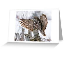 Great Grey Owl - Dunrobin, Ontario Greeting Card