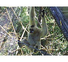 melbourne zoo Photographic Print