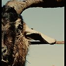 Goats head soup by madworld