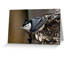 White Breasted Nuthatch - Ottawa, Ontario Greeting Card