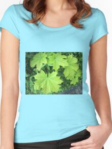 Leaves of a young maple tree on the background of a bush Women's Fitted Scoop T-Shirt