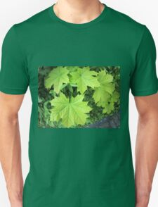 Leaves of a young maple tree on the background of a bush T-Shirt